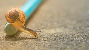 The Need for Speed: Don't Suffer Because of Your Slow Website